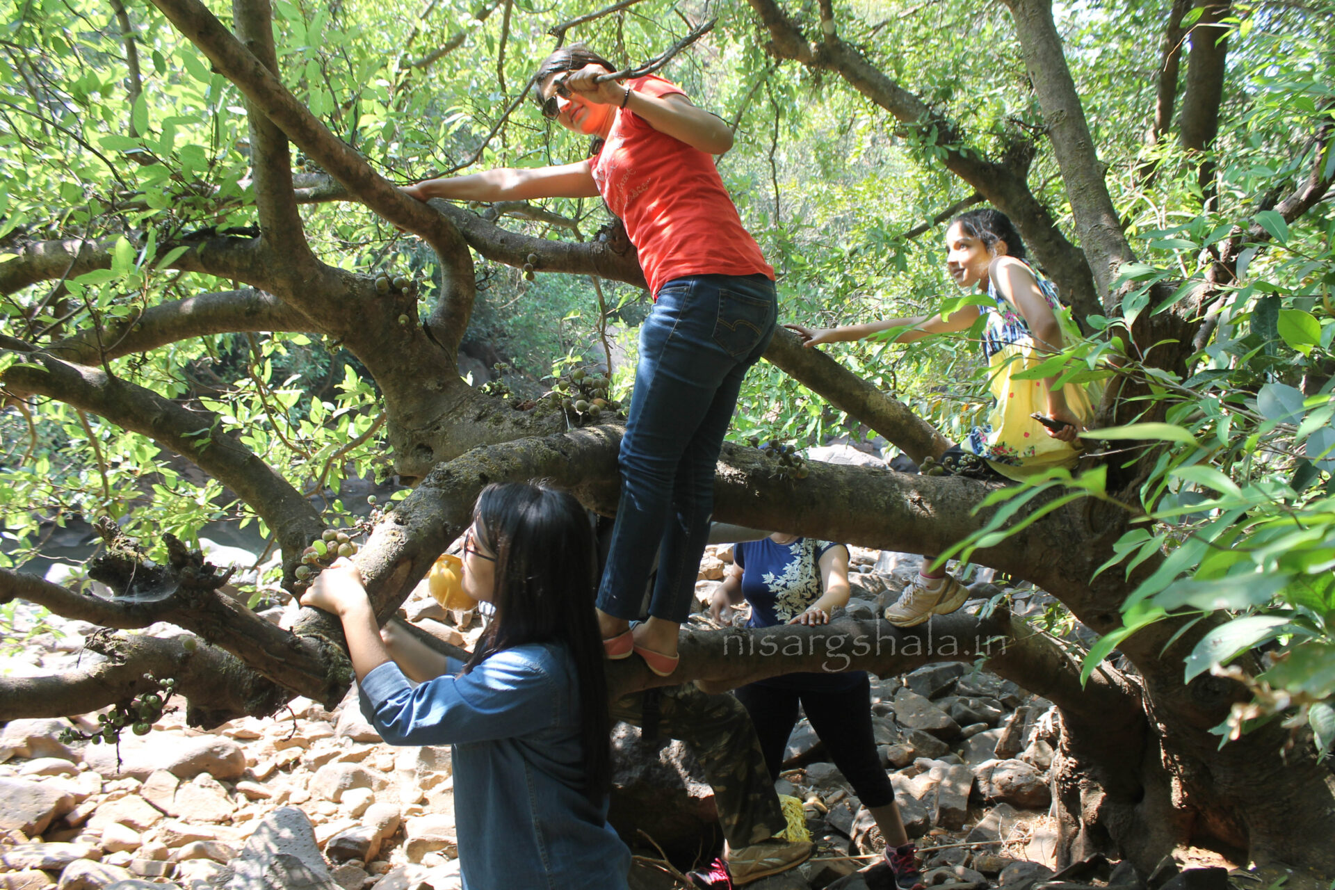 Tree climbing @ camping near Pune
