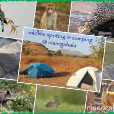 Wildlife spotting and camping near Pune