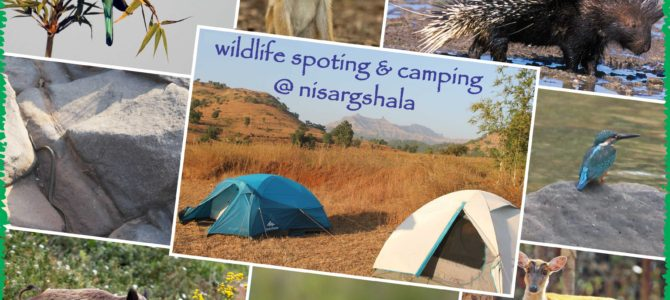 11 Cool things to do on Summer trips to Nisargshala