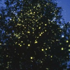 Fireflies – Mystery deciphered @ Camping near Pune