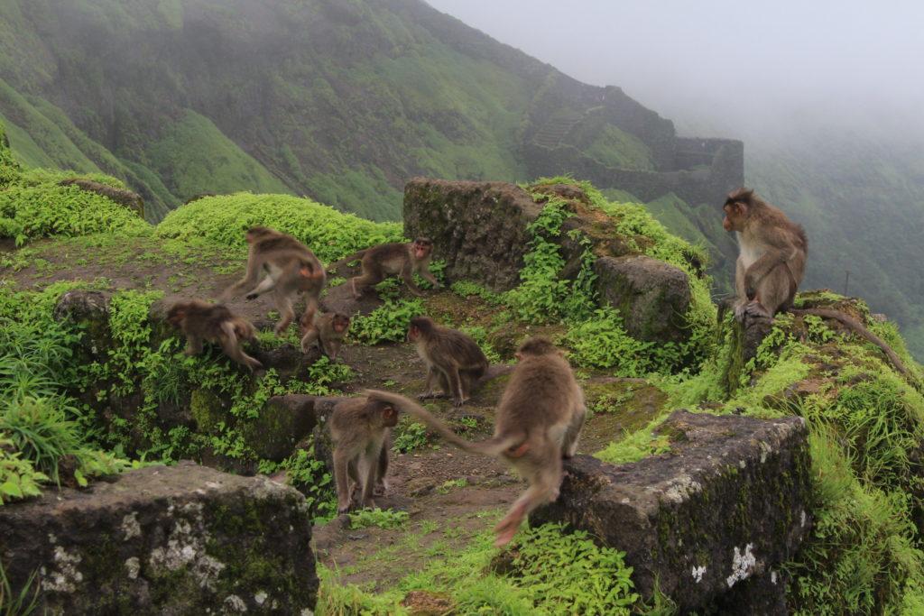 आम्हाला भेटलेले माकडांचे टोळके