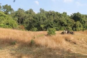 Sacred Grove - Camping near Pune
