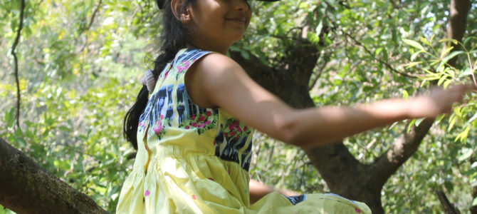 Tree climbing builds confidence and grows love for nature
