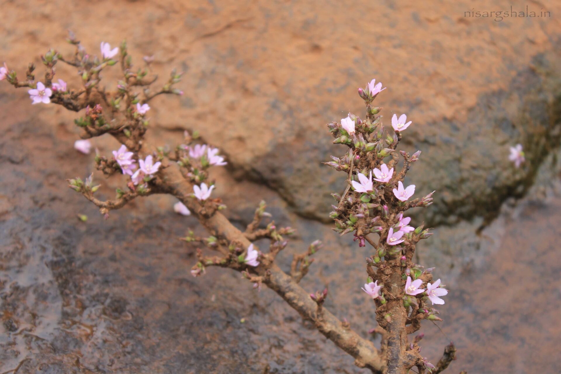 A plant bearing flowers in the riverbed near camp site