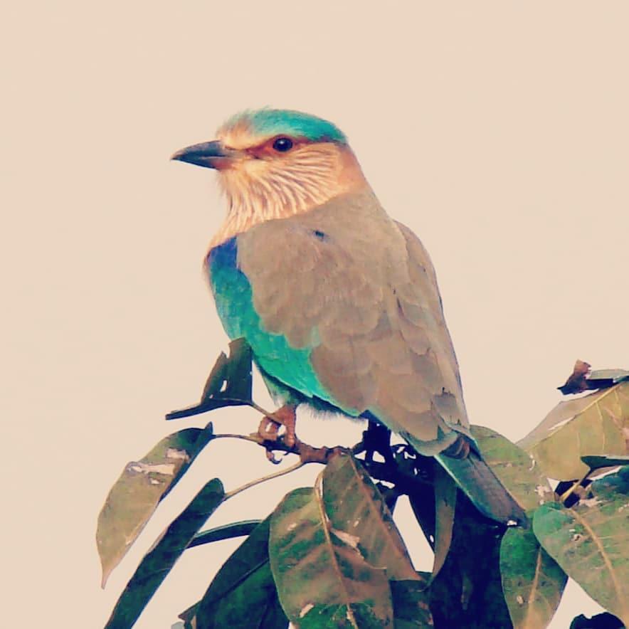 bird watching camping near Pune