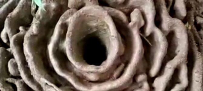 मुंग्याचा गड – गड-मुंगी : परस्परावलंबितेचे सुंदर उदाहरण