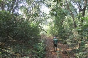 Sacred Grove - Camping near Pune